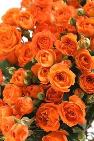Close-up of a beautiful bouquet of orange roses  Background photo