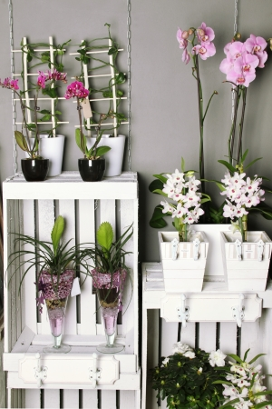 Store shelves a different product. Flowers photo