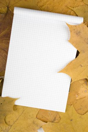 caes: En el follaje de oto�o son s�banas blancas libreta. Puede escribir texto
