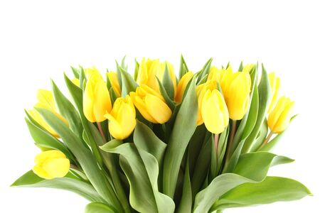 nb: Close-up of a lot of beautiful yellow tulips. Isolated on white background Stock Photo
