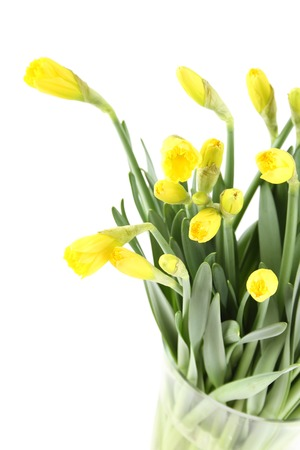 nb: Close-up of a beautiful bouquet of yellow daffodils in a glass vase. Isolated on white background