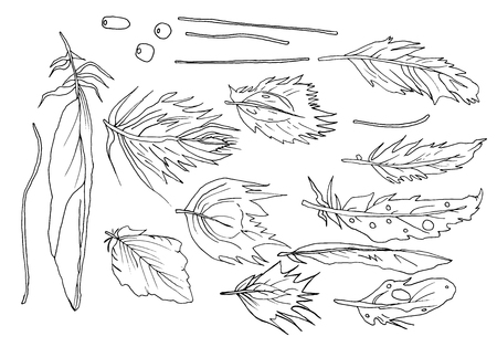 Feathers of birds of an inverted species linear pattern is simply by hand, there are a lot of coloring patterns Illustration
