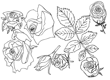 Sketch of rose, bud, leaves, different fantasy hand drawn lines, black strokes on white background isolated parts vektor