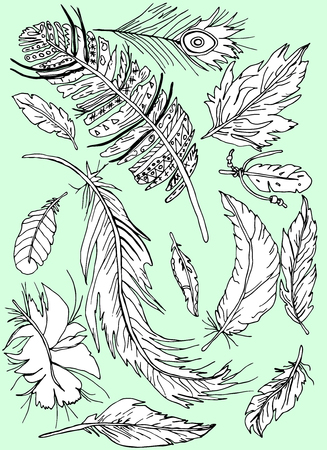 Feathers drawn peacock, pheasant and other vector figured figured elements, Indian style