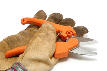 shear: Pruning Shears and Leather GlovePruning Shears and Leather Glove