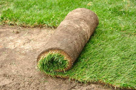 sod: Unrolling Sod for a New Lawn