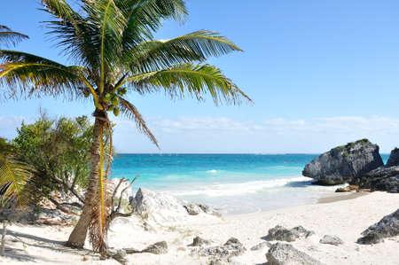 riviera maya: Idyllic White Sand Beach with Palm Tree on the Caribbean Sea Stock Photo