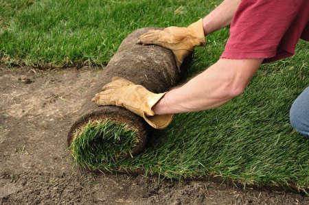 Gazon de déroulement d'une nouvelle pelouse