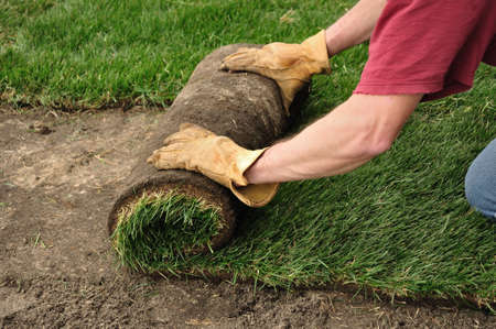 Unrolling Sod for a New Lawn Stock Photo - 13423663