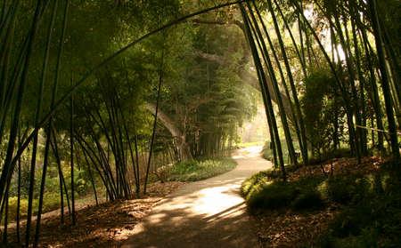 Sunbeam with bamboo