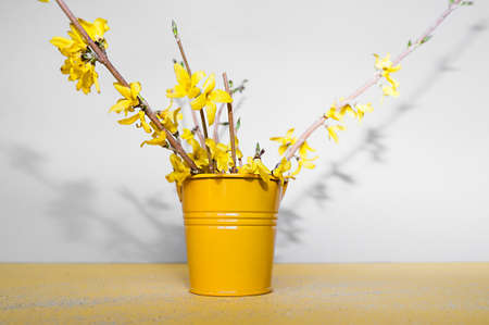 yellow small metal bucket for decoration with a bouquet of spring flowers forsythia with hard shadows on a yellow clean background