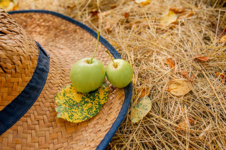 two green homemade apples and a yellow autumn leaf lie on a straw farmer's hat on the grass, Apple harvest