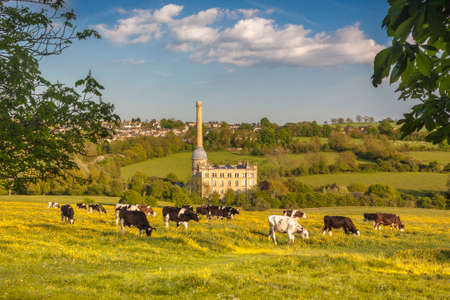 Cows in an Oxfordshire Meadow photo