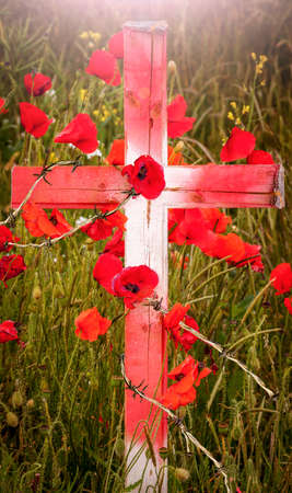 battle cross: Poppies grow around a wooden cross through barb wire