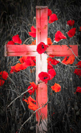 Poppies grow around a wooden cross through barb wire