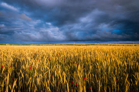 Beautiful Field of poppies under dramatic skies
