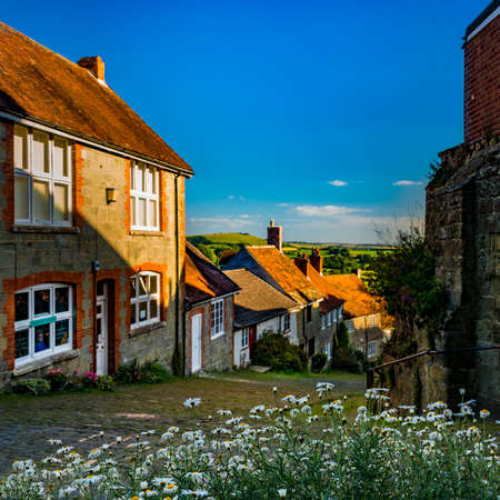 shaftesbury: Famous view down Gold Hill, Shaftesbury in the early evening late summer sunshine, looking over a bed of daisies