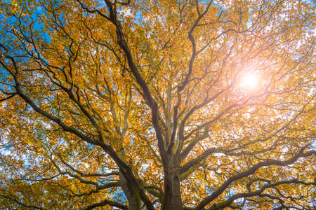Golden brown hues of leaves in the New Forest, Hampshire Stock Photo