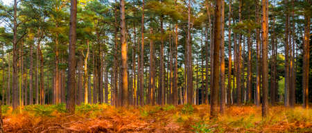 Golden brown hues of leaves in the New Forest, Hampshire Stok Fotoğraf - 119118412