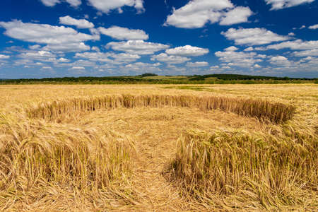 During the hot summer  a set of small crop circles appeared in a wheat field in Dorset Stock Photo