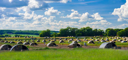 Pig farm in Dorset near Badbury Rings Stok Fotoğraf