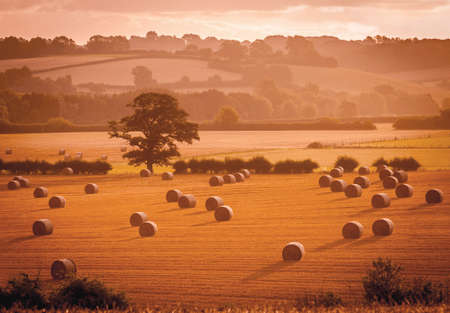 Golden sunlight casts shadows over hay bales in a field