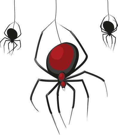 Las arañas viuda Negro aislado en un fondo blanco