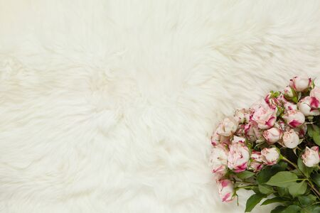 Bouquet of small roses on milk white fur carpet. Background with copy space for text, flat lay. Top view. March 8th, February 14th, birthday, Valentine's, Mother's, Women's day celebration concept.