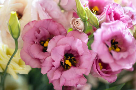 Summer floral blurry background. Bouquet of beautiful eustoma. Soft selective focus. For design of invitations, greeting cards. Horizontal. Side view, closeup. Standard-Bild