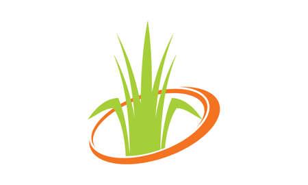 Service de tondeuse à gazon