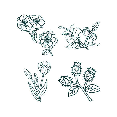 Flower Leaf Illustration Design Template Vector Imagens - 124372692