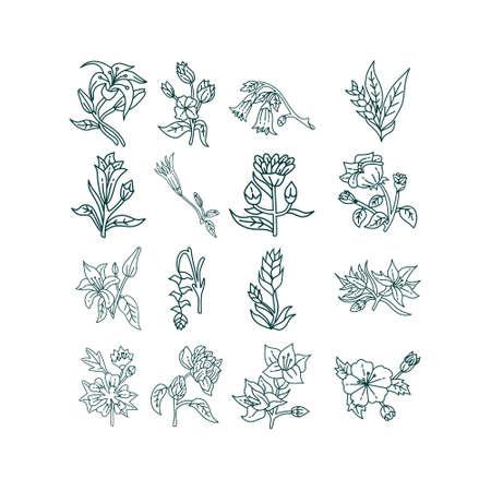 Flower Leaf Illustration Design Template Vector Imagens - 124372694