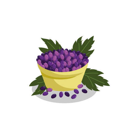 Grape bunches Fruit and leaves illustration Ilustração