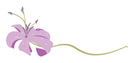 Purple Lily Flower vector illustration