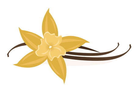 Vanilla Flower vector illustration