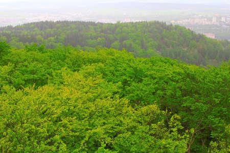 carlsbad: Carlsbad forest
