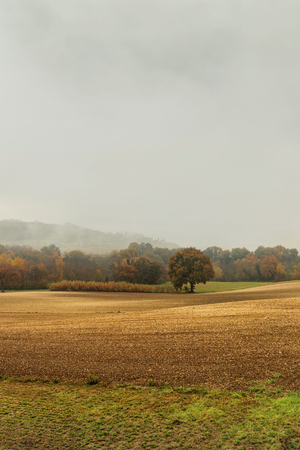 Autumn landscape in the countryside, plowed fields and woods, bad weather