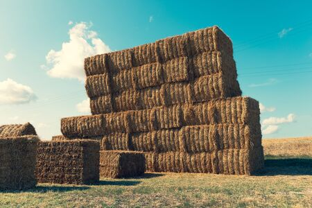 View of stacked hay bales, rural scene