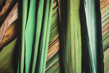 Nature abstract, texture of bamboo leaves, close-up
