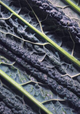 Close-up of black cabbage, organic texture