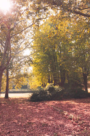 Trees of the park with yellowed leaves, outdoors