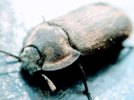 A picture of beetle