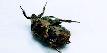 beetle on white background Stock Photo
