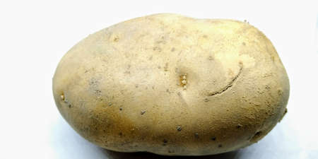 A picture of potato on white background 写真素材