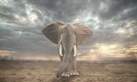 composit: African elephant in sahara
