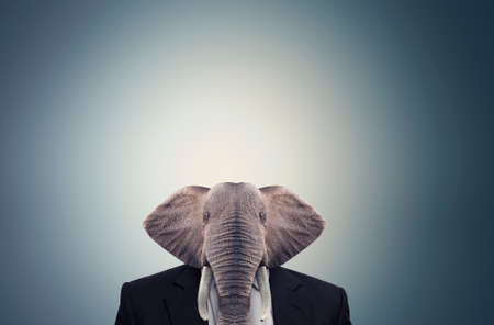 Elephant dressed in a businees suit