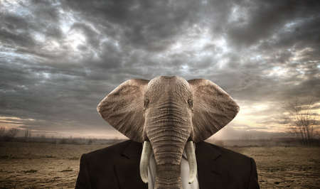 Elephant dressed in a businees suit on a african background. Stock Photo