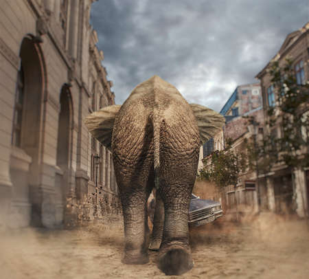 Elephant walking to a car in the city. Car avoids the elephant. Stock Photo