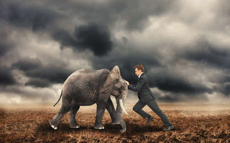 Businessman pushing with an elephant on a field. Stock fotó