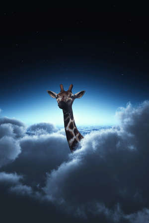 Giraffe above clouds during night. Stock Photo